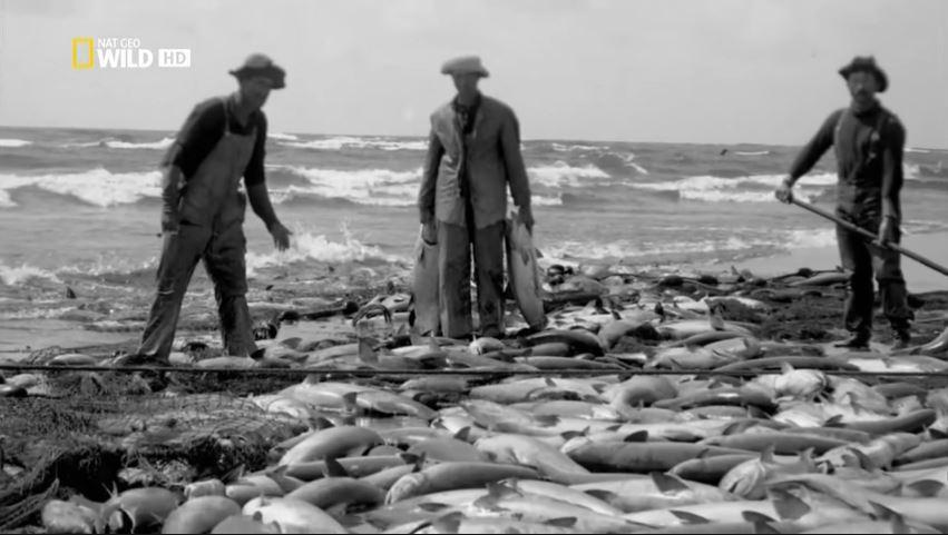 las-guerras-del-salmon